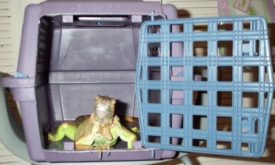 Darwin Cat Carrier.jpg