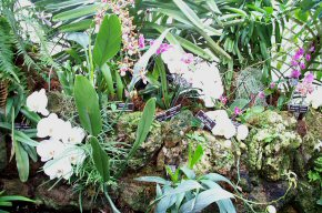 Orchids and More Orchids.jpg